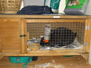 rabbit_in_hutch